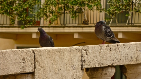 Pigeons on Pte. San Michele - Vicenza, Italy | ©Tom Palladio Images