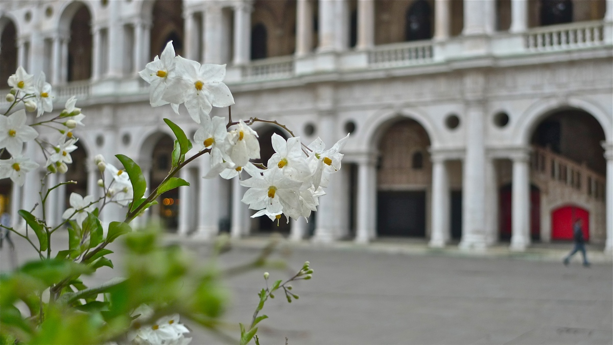 Good Sights: Italy - Vicenza's Basilica Palladiana (video)