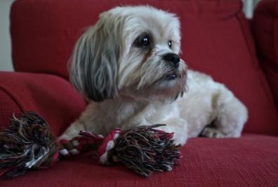 Puppy love 1 | ©Tom Palladio Images