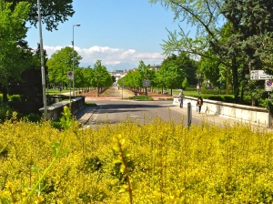 Street scene - Santa Libera Bridge - Vicenza, Italy | ©Tom Palladio Images