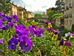 Morning in Bloom - Vicenza, Italy   ©Tom Palladio Images