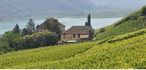 Wilhelm Walch vineyards