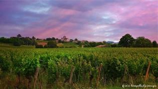 Bonsoir in the Vineyards | ©Tom Palladio Images