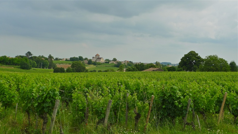 Aquitaine wine country scenic | ©Tom Palladio Images