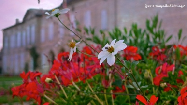 Saint-Emilion, FR scenic | ©Tom Palladio Images