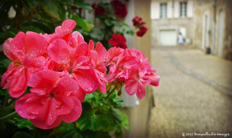 Flowers along the rue - Saint-Emilion, FR | ©Tom Palladio Images
