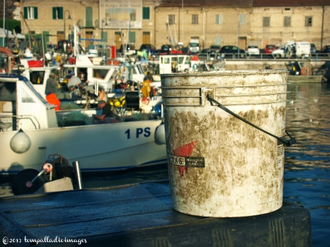 Something's Fishy in Senigallia, Italy | ©Tom Palladio Images