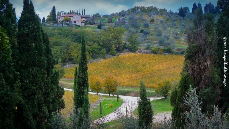 Country Roads: Chianti pours forth from Fonterutoli | ©Tom Palladio Images