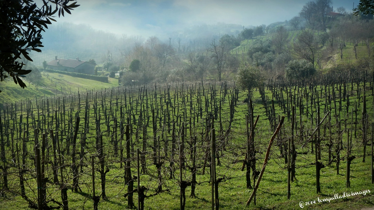 Traveling the Wine Roads of Italy: Ca' Lustra