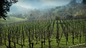 Traveling the Wine Roads of Italy: Ca' Lustra| ©Tom Palladio Images