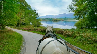 A jaunting car ride through Killarney National Park, Co. Kerry, Ireland