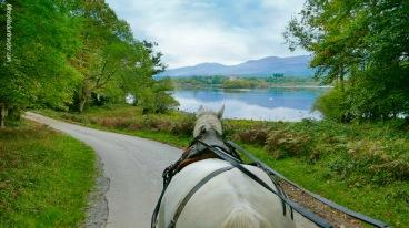A jaunting car ride through Killarney National Park, Co. Kerry, Ireland