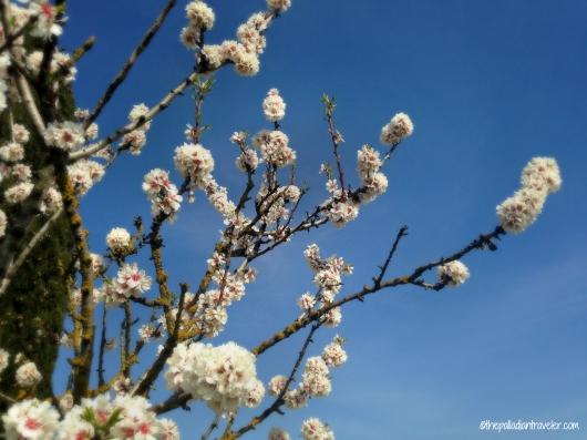 CE Spring10_WM