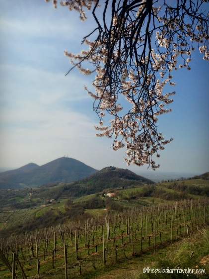 CE Spring11_WM