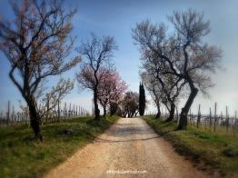 CE Spring13_WM