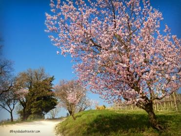 CE Spring1_WM