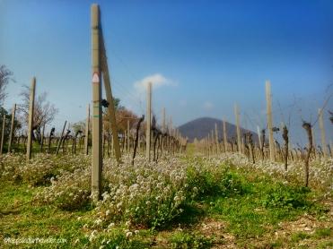 CE Spring4_WM
