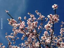 CE Spring9_WM