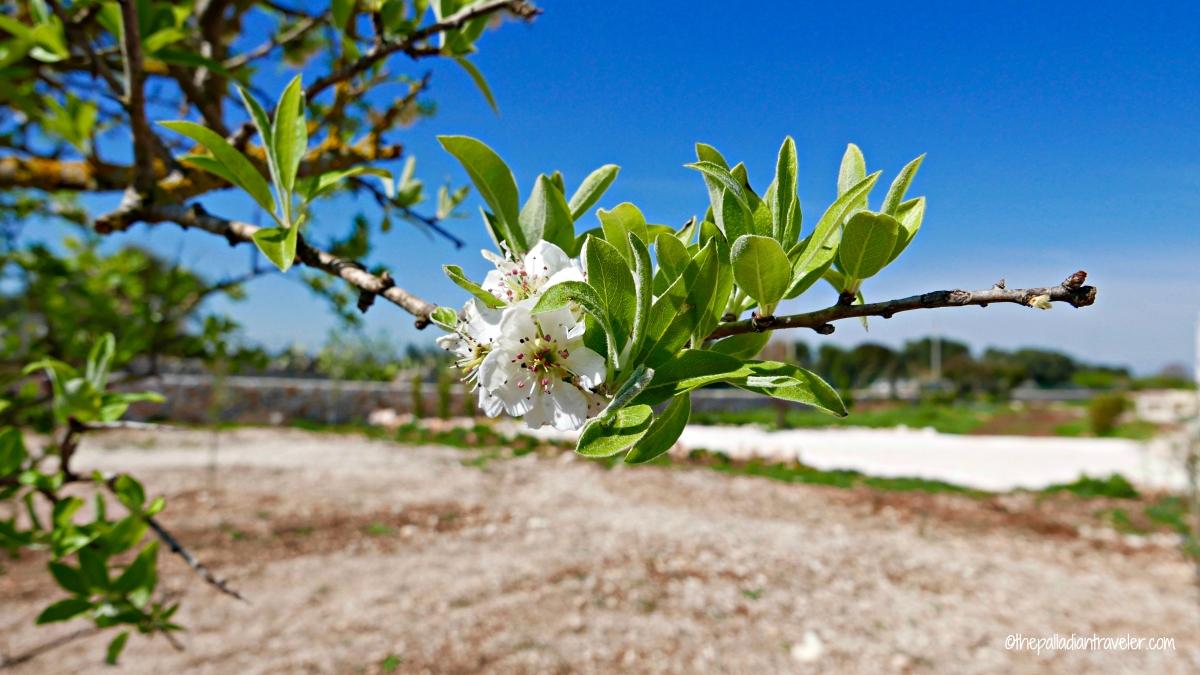 Villa Allegra: Our little Hilltop Shangri-La in Puglia