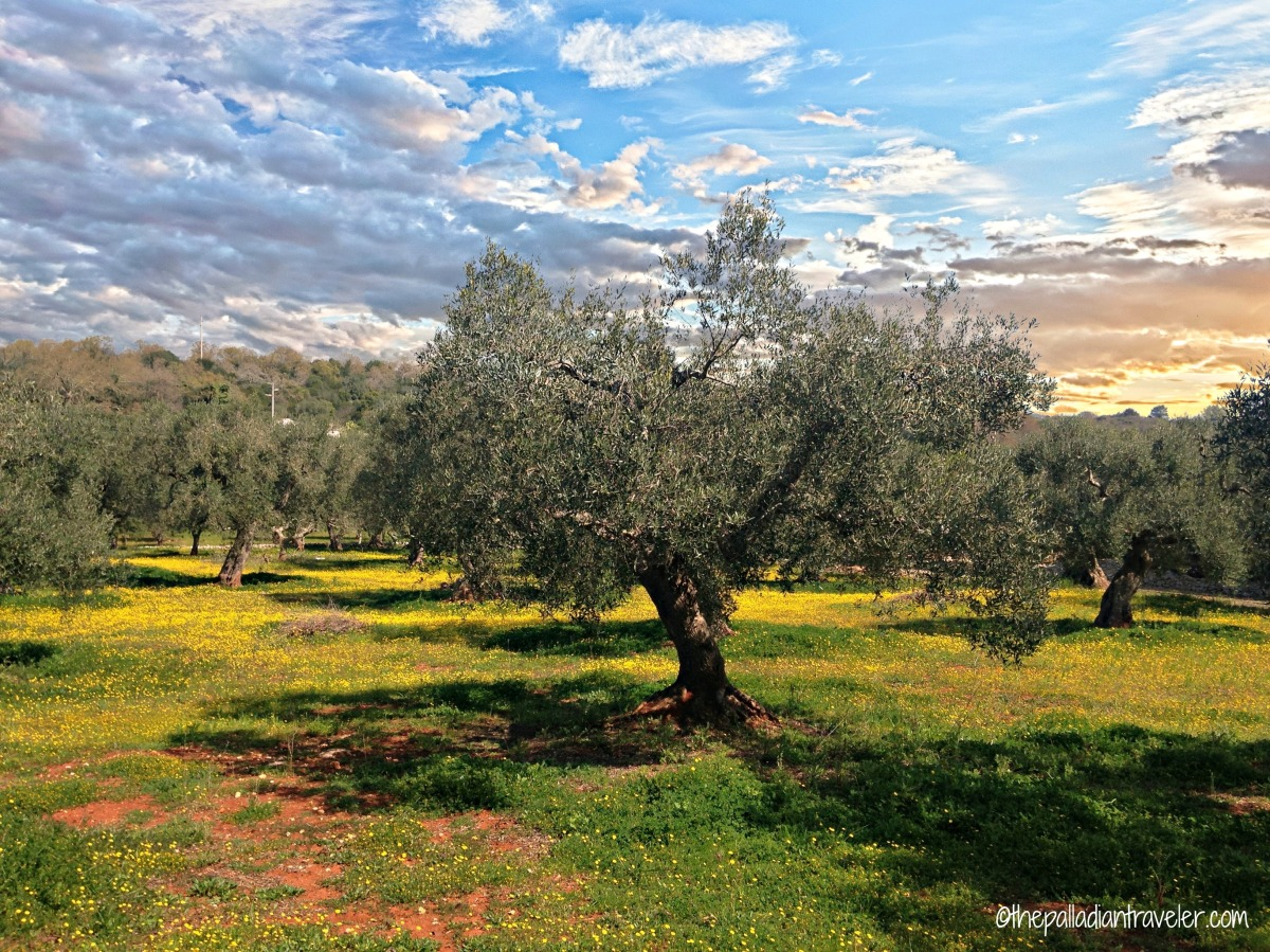 A New Beginning in Puglia's Valle d'Itria