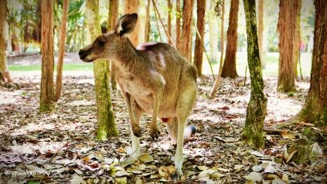 Australia_14WM
