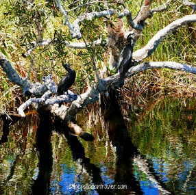 Australia_Everglades 106WM