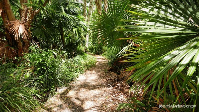 Australia_Everglades 111WM