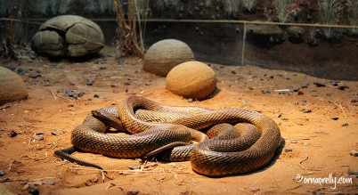 Australia_Zoo WM1003