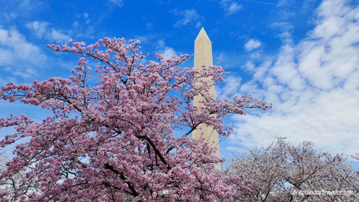 Destination Washington, DC: The Cherry Blossom Festival