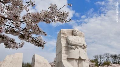 Cherry Blossom 103