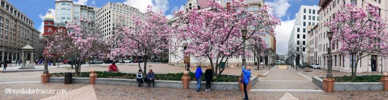 Cherry Blossom 110